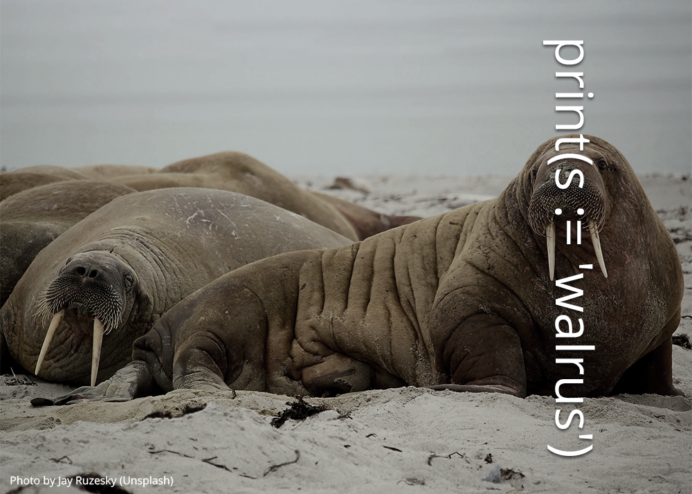 Image of a walrus with code overlaying the tusks